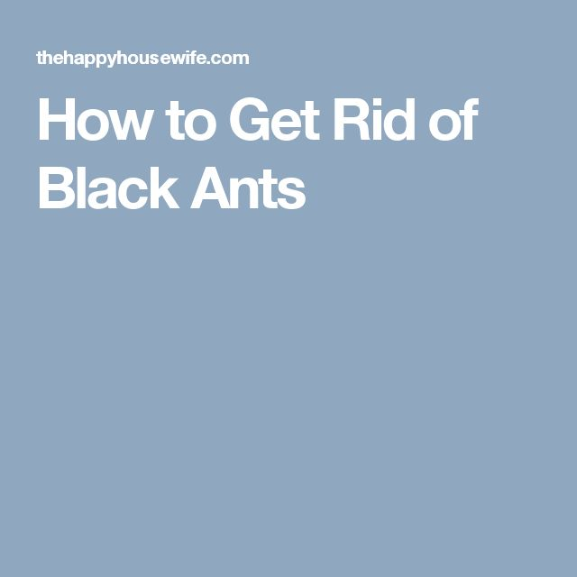 Die besten 25+ Black ants Ideen auf Pinterest Ameisen, Rüschen - ameisen in der k che was tun