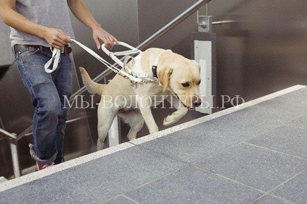 Поправки в правила перевозки собак в метрополитене  http://xn----dtbjxcjfbus6gj.xn--p1ai/news/%d0%bf%d0%be%d0%bf%d1%80%d0%b0%d0%b2%d0%ba%d0%b8-%d0%b2-%d0%bf%d1%80%d0%b0%d0%b2%d0%b8%d0%bb%d0%b0-%d0%bf%d0%b5%d1%80%d0%b5%d0%b2%d0%be%d0%b7%d0%ba%d0%b8-%d1%81%d0%be%d0%b1%d0%b0%d0%ba-%d0%b2-%d0%bc/ Официально разрешить собакам спускаться в метрополитен намерены столичные
