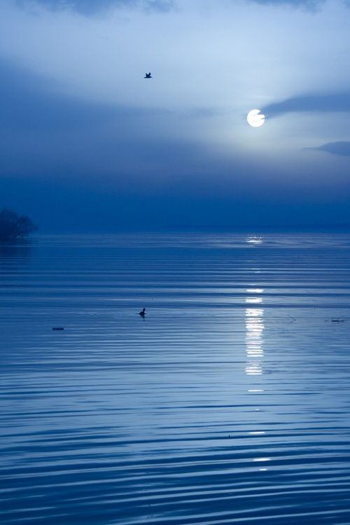 unwrittennature:  Moonlight Sonata by: Kaan Köse.  I love playing Moonlight Sonata on piano!