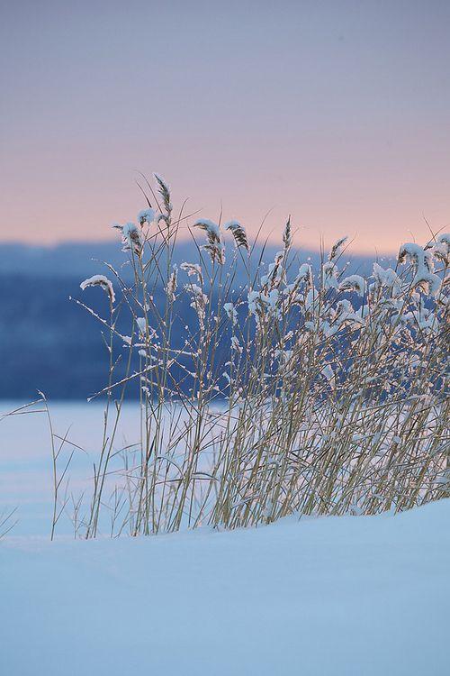 **winter beauty (via tumblr, fishing-on-the-dock)