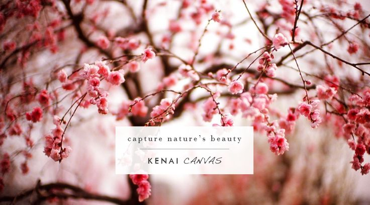 Choose between white borders and full image wrap for edge detail & black and white, sepia toned, or full colour for your canvas. Contact me at arno@kenaicanvas.co.za or call: 062 483 8925 and take a look on our website: http://www.kenaicanvas.co.za/ #KenaiCanvas #Detail