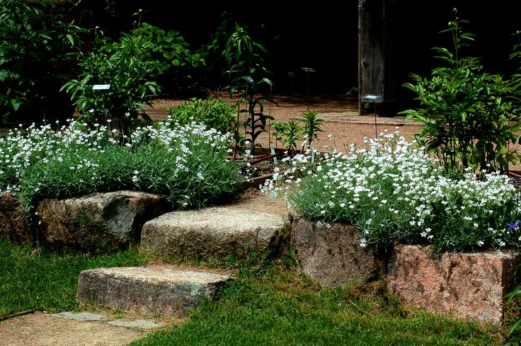1000 Ideas About Full Sun Plants On Pinterest Shade Plants Perennials And Flower Beds