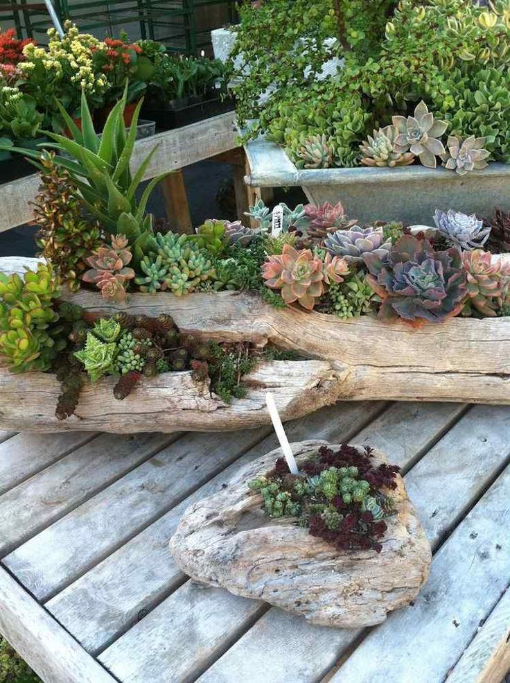 Decorate the garden with materials found in nature, such as driftwood containers & aged pieces of wood. Succulent plant are particularly suited because of their unique rustic appearance, amazing shapes & beautiful colors!