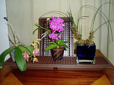 Here is a list of frequently asked questions and information regarding orchid grwoing