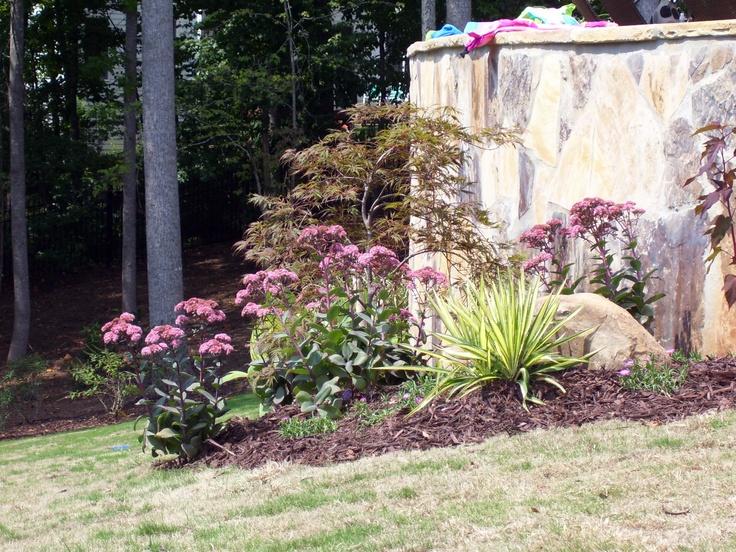 77 best landscaping gardening images on pinterest for Low maintenance garden trees