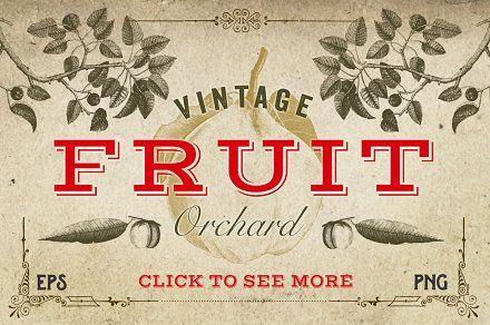 Vintage Fruit Vector Graphics