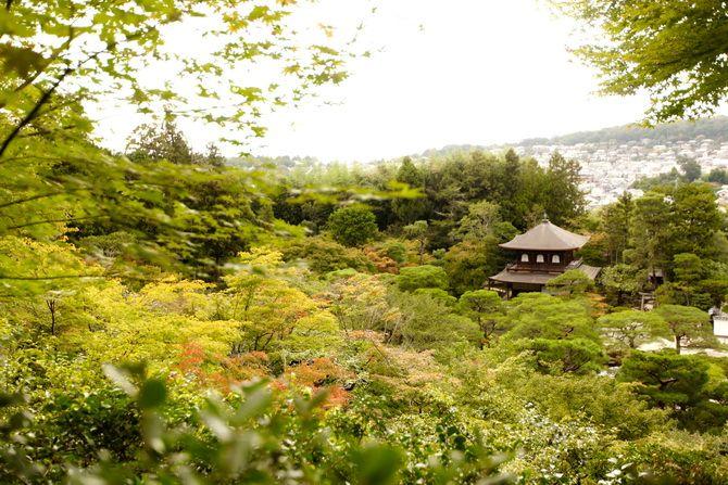 The Cherry Blossom Girl - Japan 2014 13
