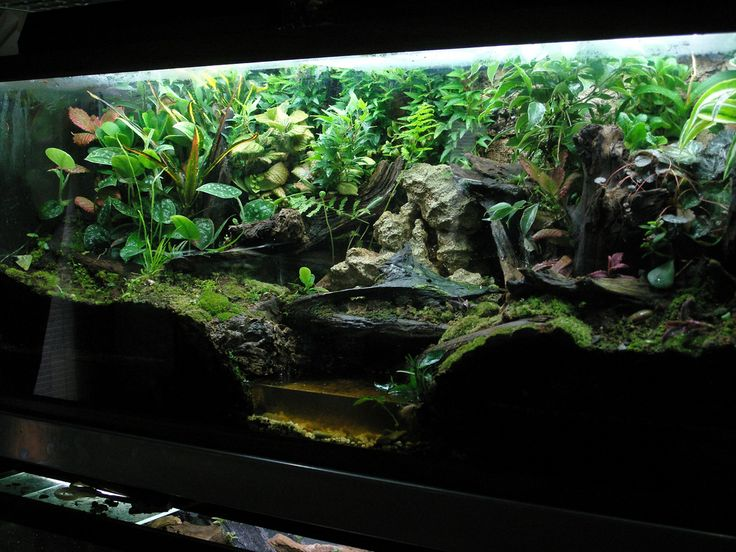Images For > 10 Gallon Dart Frog Vivarium | Vivariums ... 10 Gallon Vivarium