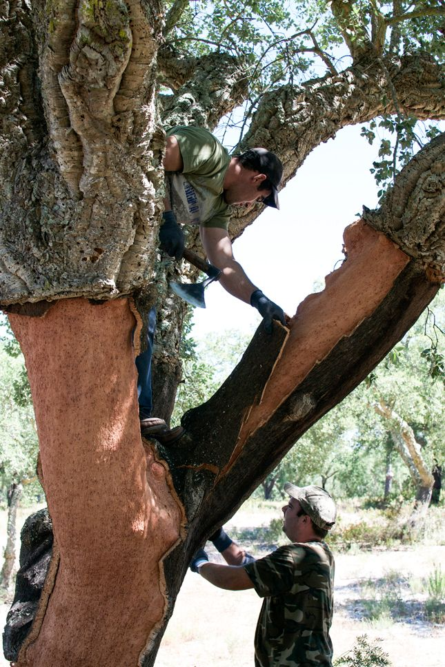 Happy Interior Blog: From Place To Space: Cork Harvest In Portugal