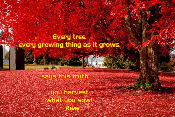 """""""Every tree, every growing thing as it grows,  says this truth . . . you harvest what you sow!""""  ~ Rumi"""