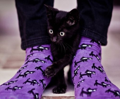 I comes with matching socks!: Kitty Cat, Animals, Purple, Black Cats, Cat Socks, Kittens, Blackcats, Cat Lady