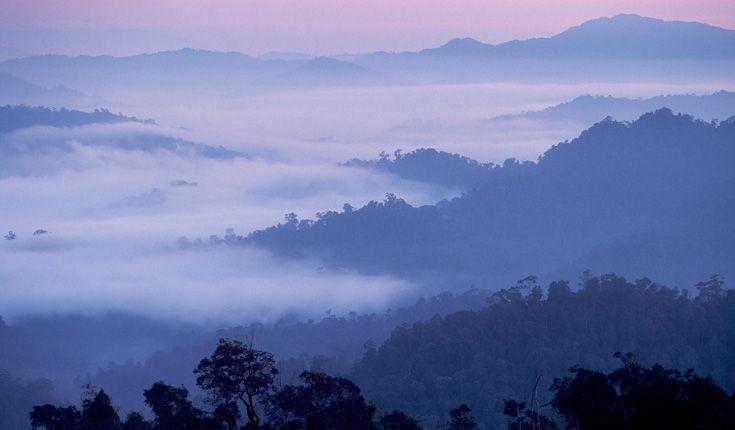 Dawn Rainforest