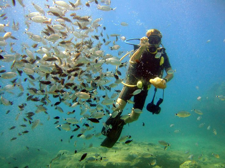 Lunch time.  Feeding fish during a dive in Alanya, Turkey