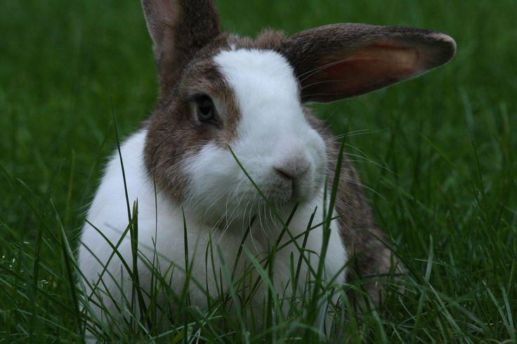 cute rabbit ;)
