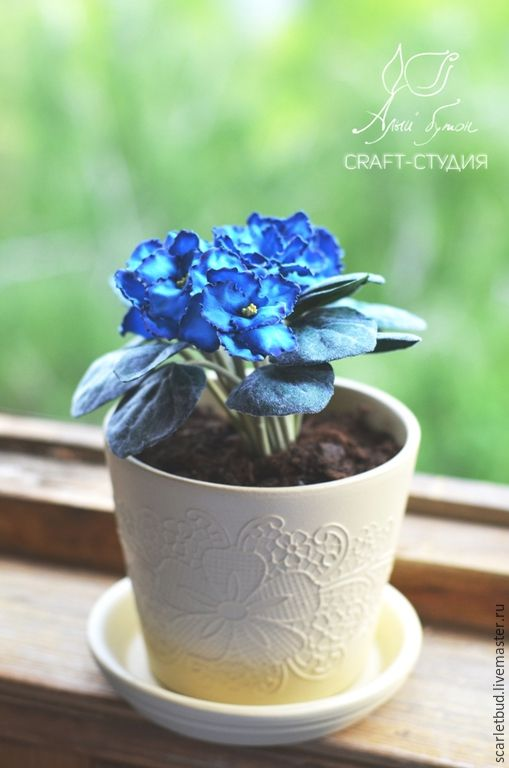20b32725ec5252a595eac82f9dbg--tsvety-floristika-fialka-blue-dragon-iz.jpg (509×768)