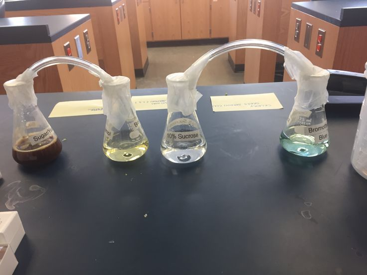 Fermentation changes the color of the Bromothymol Blue to yellow by the release of carbon dioxide