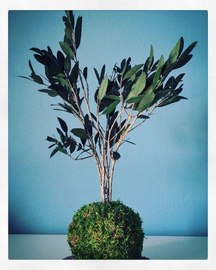 kokedama design v g tal plantes stabilis es cr ation et r alisation adventive interior plant. Black Bedroom Furniture Sets. Home Design Ideas