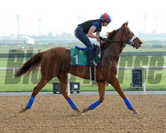 Horse running sequence