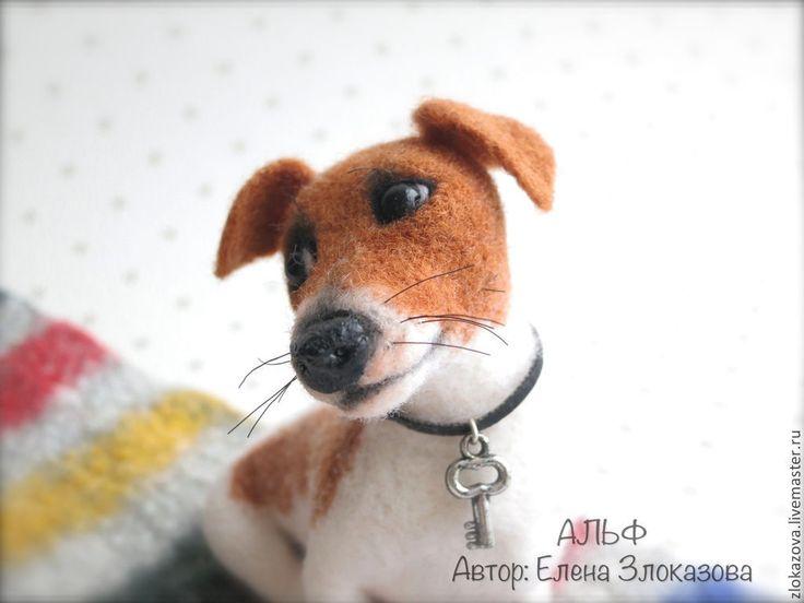 Купить джек рассел терьер Альф - коричневый, белый, джек рассел терьер, собачка, собака