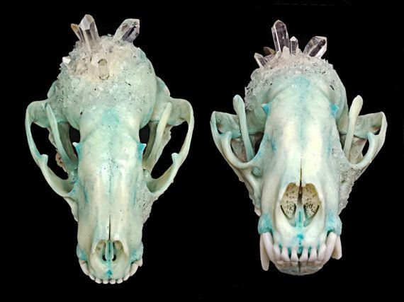 Raccoon Skull  Crystallized Skull  Animal by KristenJarvisART