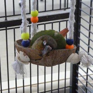 Green Cheek Conure Sleep Habits