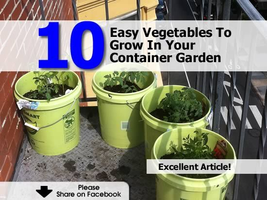 10 Easy Vegetables To Grow In Your Container Garden - http://www.hometipsworld.com/10-easy-vegetables-to-grow-in-your-container-garden.html