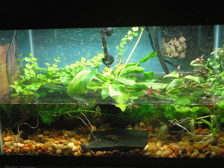 Best 25+ Tree frog terrarium ideas on Pinterest   Frog ... 10 Gallon Dart Frog Vivarium