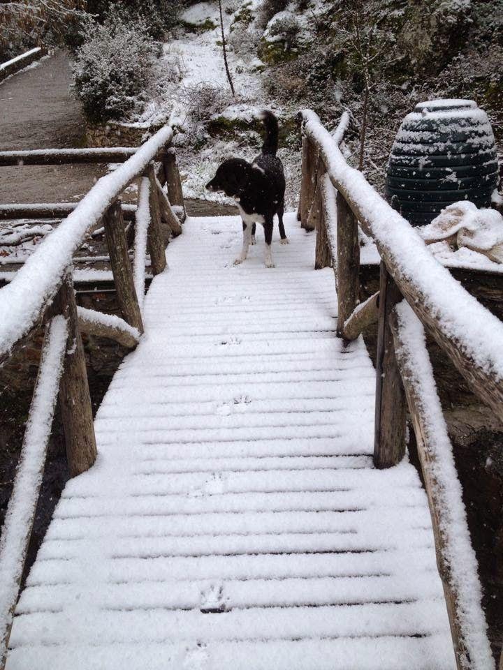 """Όσιος Ευθύμιος ο Νέος, ο εν Βραστάμοις ασκητεύσας: """"χιόνια στο χωριό """" φωτογραφίες Βασίλης Χαιρiστανί..."""