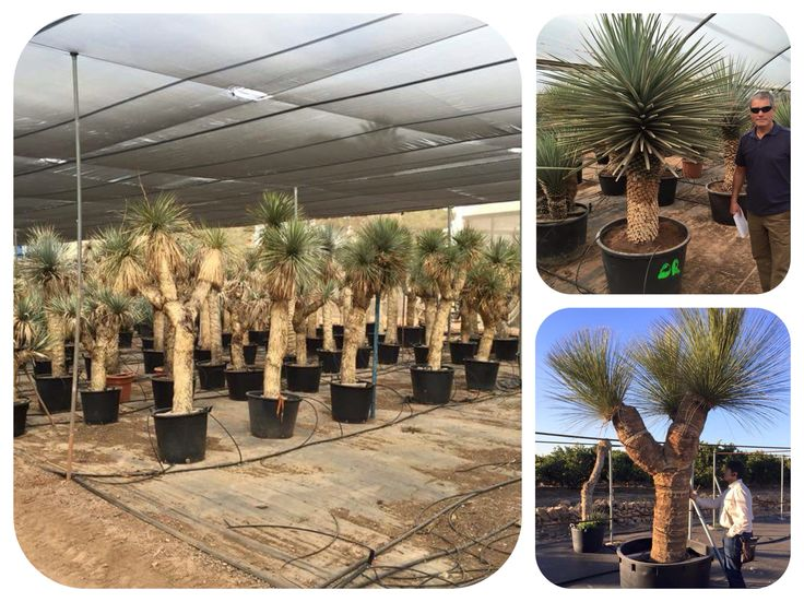 Some more of the beautiful plants we saw in Valencia last week. We have some huge plants arriving in the next few weeks it's going to be fun unloading them!