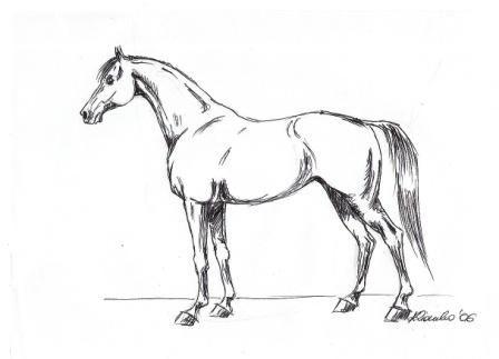 koń prosty rysunek - Szukaj w Google