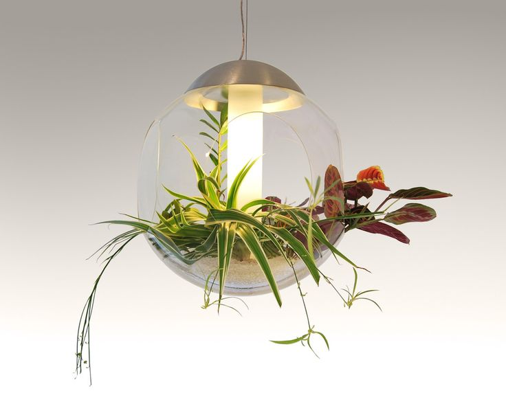 Babylone lampe - en levende lampe :)