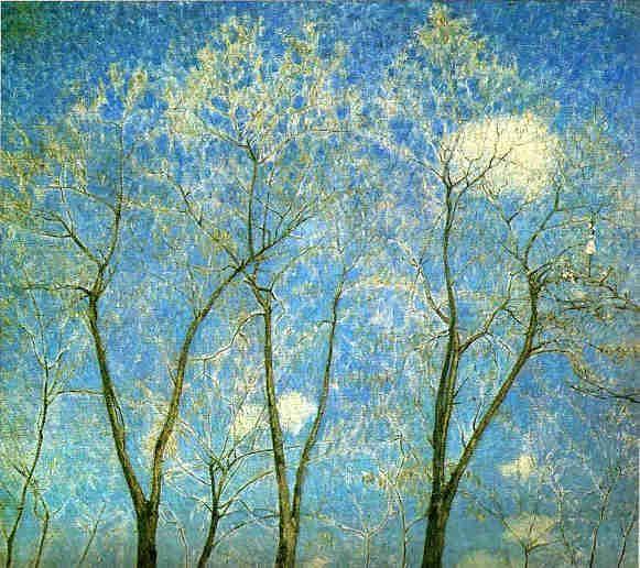 Acacias at springtime