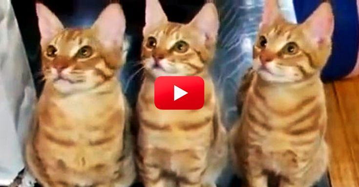 This Video Of Cats Watching A Tennis Match Is Too Funny! I Died Laughing At 0:18! | The Animal Rescue Site Blog
