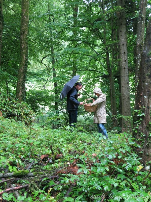 Wildkräuter sammeln www.stadt-land-gnuss.ch
