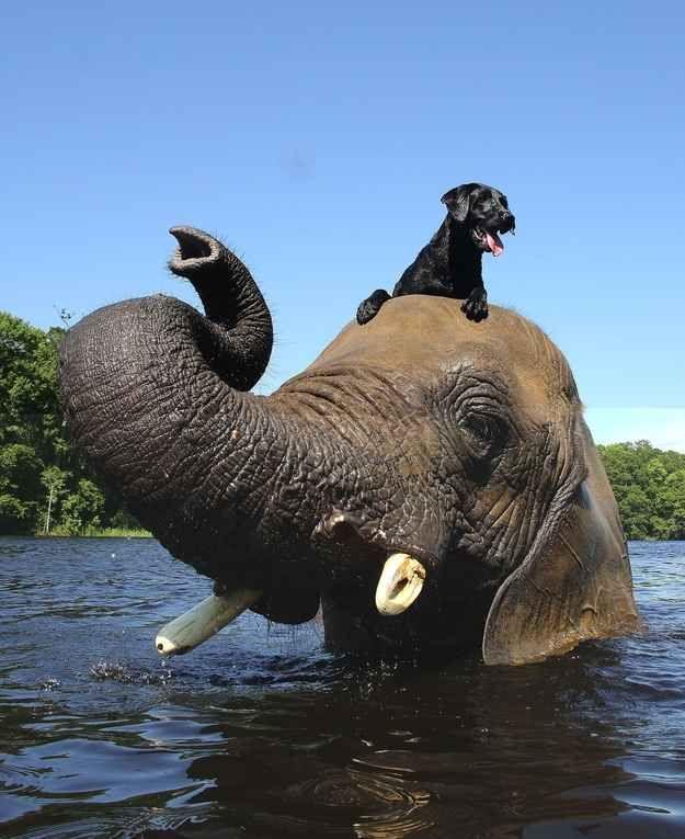 Elephant with dog as best friend.