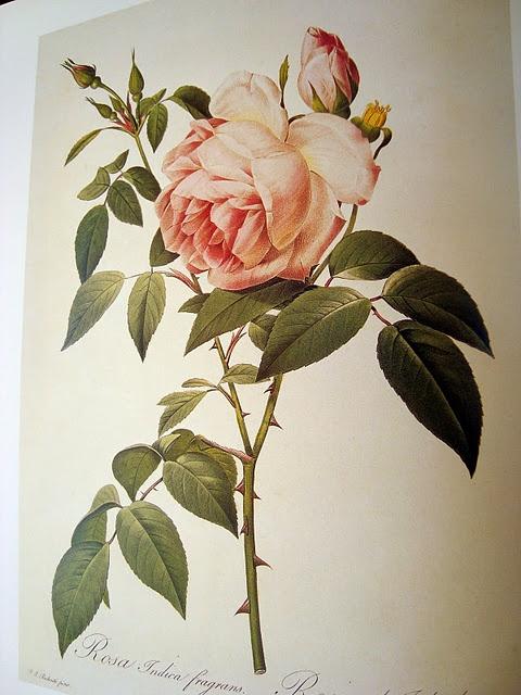 Las Rosas de Pierre-Joseph Redouté