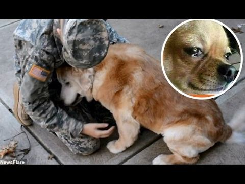 Dogs Crying When He Meets Owner After 2 year, 5 year,10 year...separation - YouTube