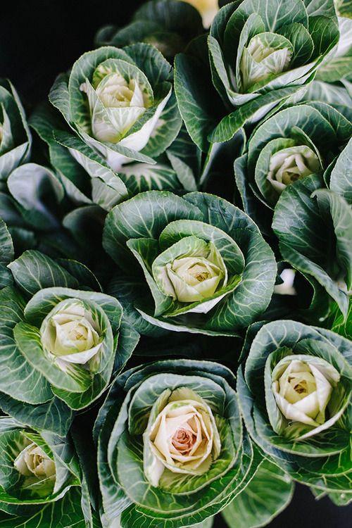 cabbage /