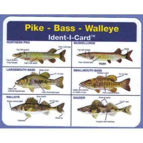 15 best images about fishing id charts on pinterest for Florida freshwater fish species