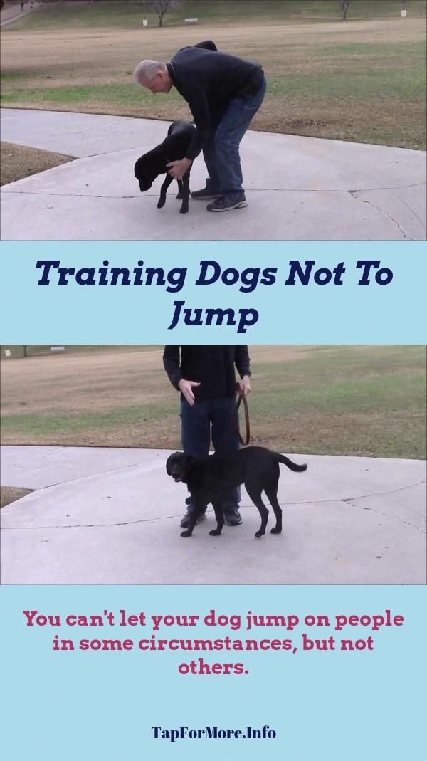 Stop Dog Jumping And Getting Puppy To Walk On Leash Check The