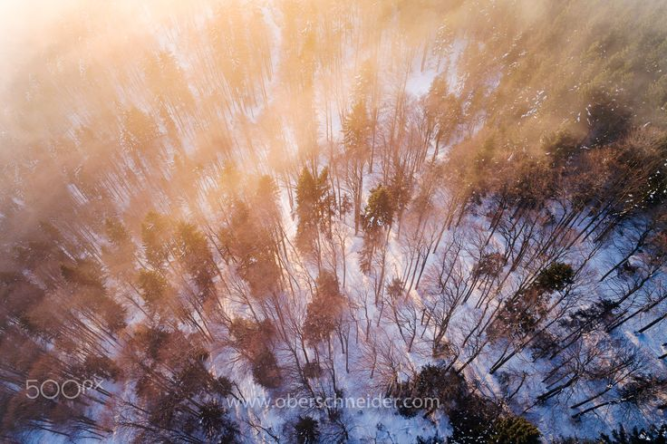 """Golden Hour in the Forest - Aerial shot taken with a DJI Phantom 4 Pro. Image available for licensing.  Order prints of my images online, shipping worldwide via  <a href=""""http://www.pixopolitan.net/photographers/oberschneider-christoph-a6030.html"""">Pixopolitan</a> See more of my work here:  <a href=""""http://www.oberschneider.com"""">www.oberschneider.com</a>  Facebook: <a href=""""http://www.facebook.com/Christoph.Oberschneider.Photography"""">Christoph Oberschneider Photography</a> follow me on <a…"""