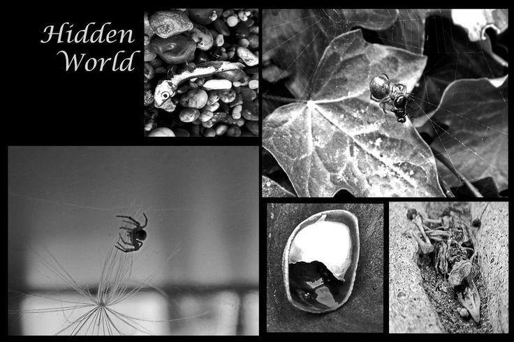 Hidden World  Collection Black & White  A3 Unframed Print