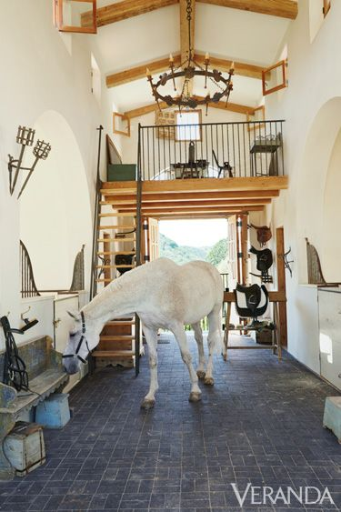 Picasso, a gray Westphalian gelding, in the stable. Walls in Tapestry Beige, Benjamin Moore Aura.