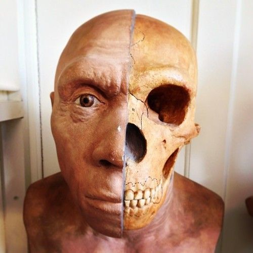 a history of the neanderthals ancestors of the homo sapiens For almost a century, neandertals were considered the ancestors of modern   gave rise to homo sapiens in africa mated with a neandertal male more  of the  max planck institute for the science of human history in jena,.