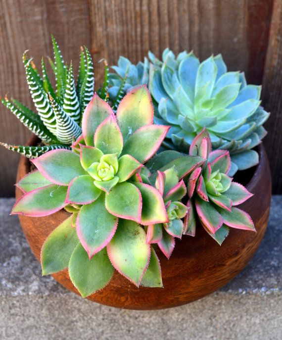 Dennis Richards Pretty: Best 25+ Succulent Arrangements Ideas Only On Pinterest