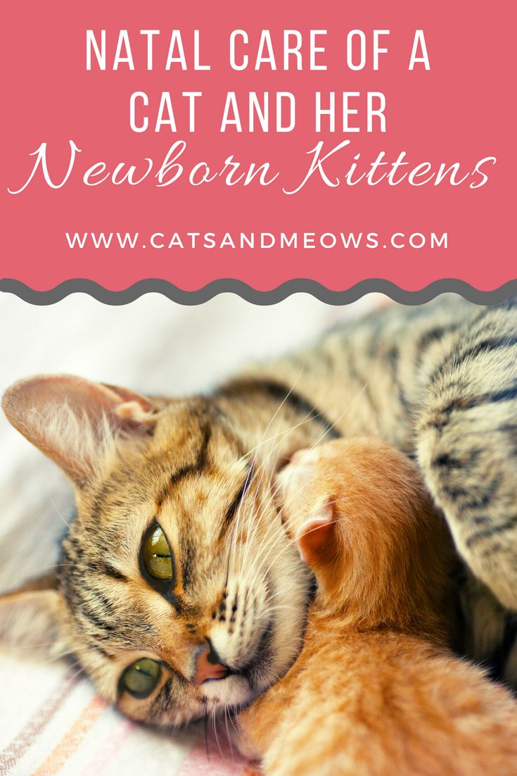 Best 25 Taking care of kittens ideas on Pinterest