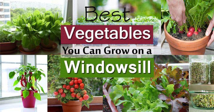 1000 images about winter indoor gardening on pinterest for Indoor gardening near me