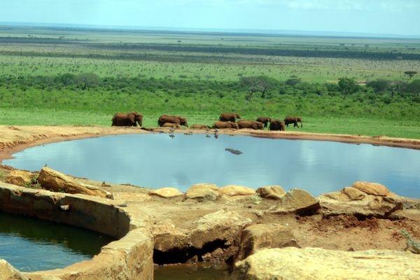 Elephants @ Tsavo Ouest