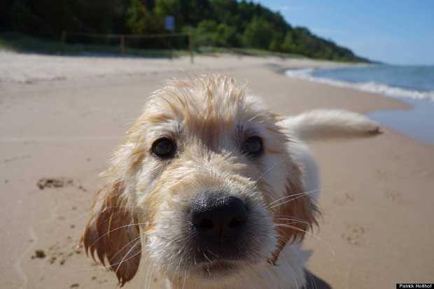 Η πρώτη βόλτα ενός κουταβιού στην παραλία (pics)