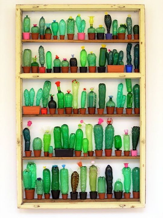 Cactus neatly organised on shelves by artist Veronica Richterova.